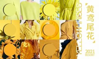 2021春游色彩:黃鳶尾花